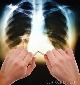 Почему курение сигарет вызывает рак?