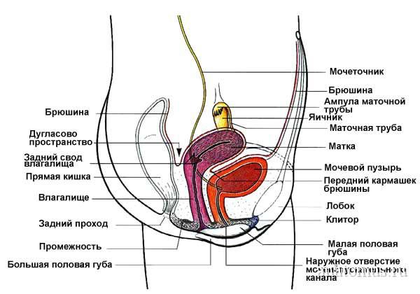 kak-nazivaetsya-polost-vokrug-vlagalisha